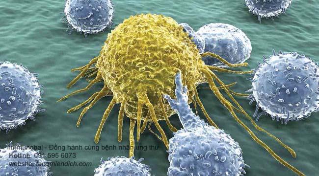 liệu pháp miễn dịch trong điều trị ung thư 02