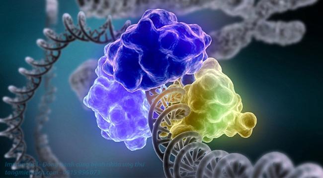 Liệu pháp tế bào miễn dịch ung thư