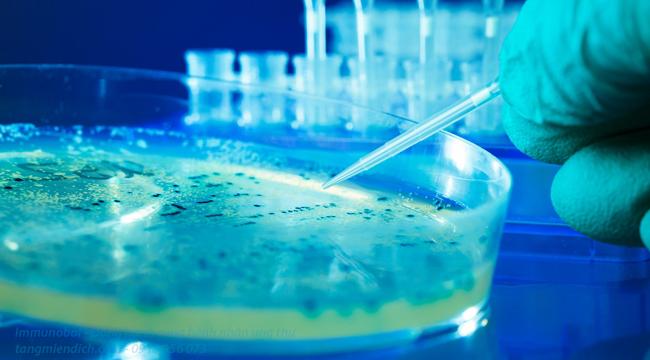 ghép tế bào gốc là gì