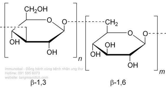 Beta glucan 1 3 1 6