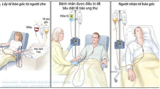 Phân loại tế bào gốc