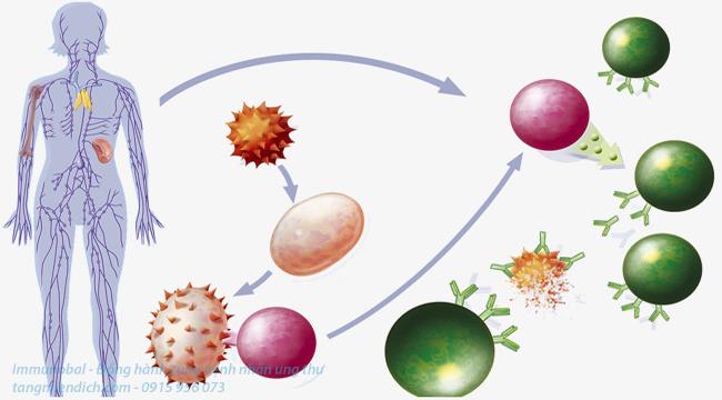 Sự khác nhau giữa miễn dịch tự nhiên và miễn dịch nhân tạo