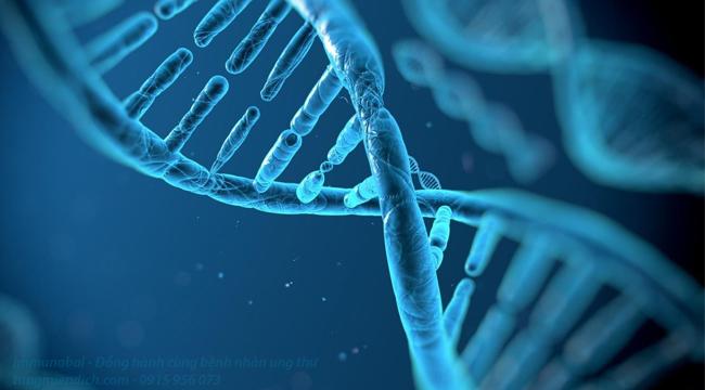 phương pháp cấy tế bào gốc