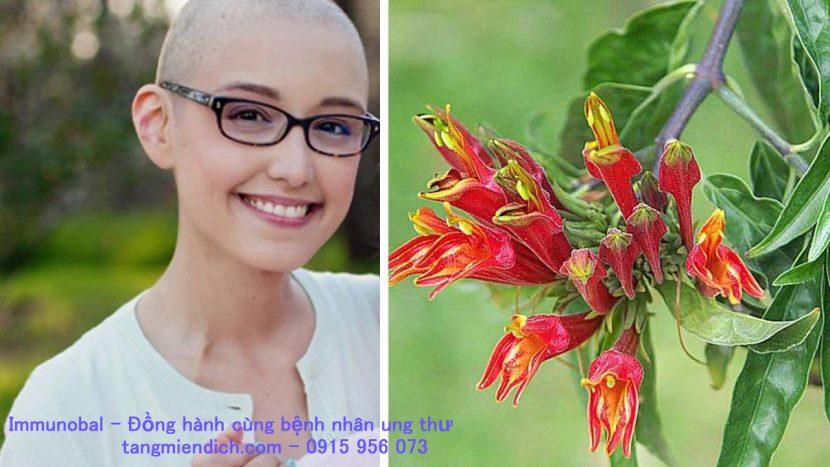 Các loại cây chữa bệnh ung thư