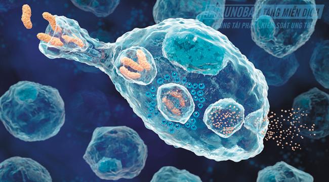 hệ miễn dịch là gì