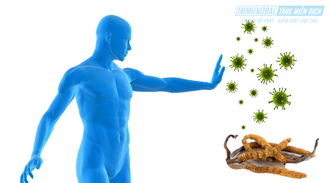 sử dụng đông trùng hạ thảo