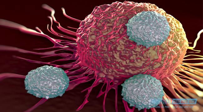 Miễn dịch nhân tạo là gì