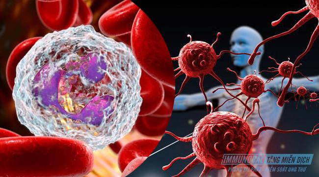bạch cầu và miễn dịch