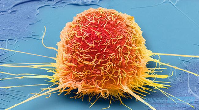 Thuốc điều trị ung thư gan