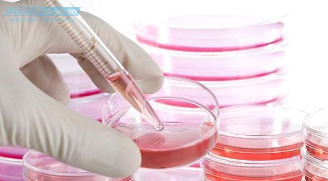 Cấy tế bào gốc là gì